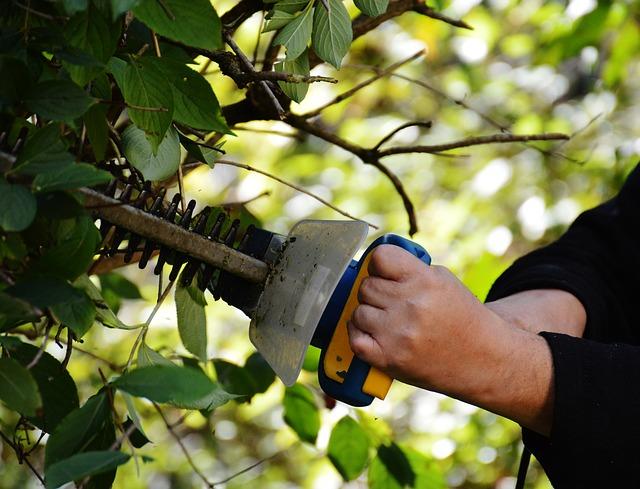 řezání stromu