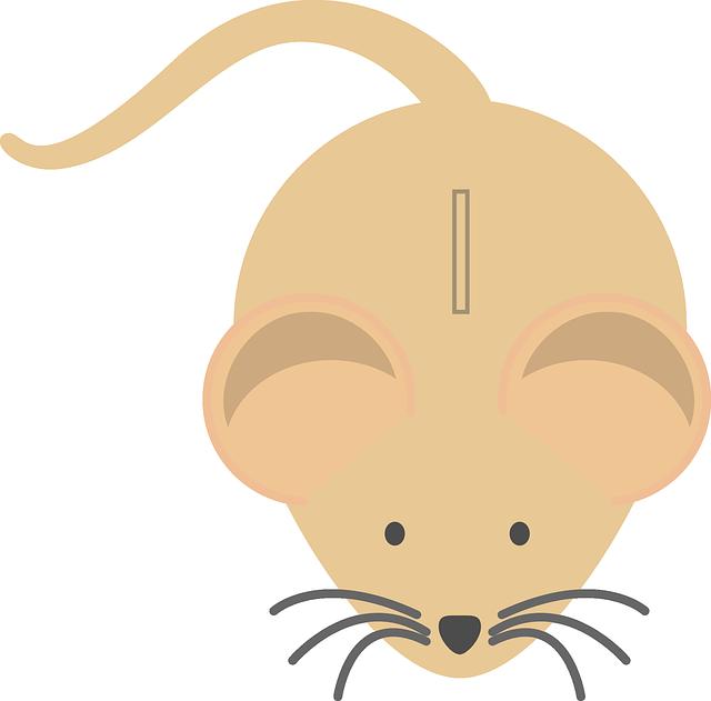 myš, pokladnička, kasička